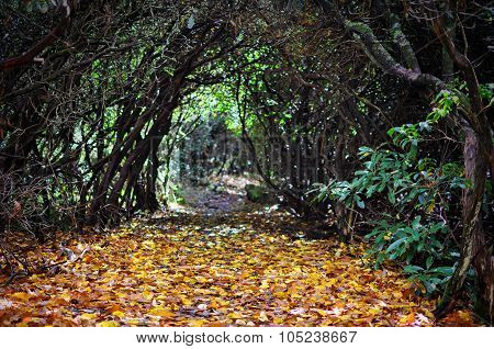 Autumn path through tangled rhododendron branches with focus on the yellow fall leaves