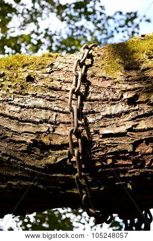 chain on the tree