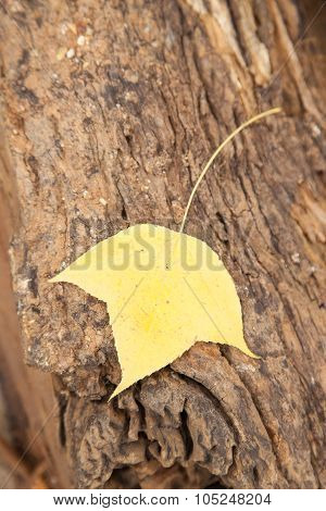 Leaf On The Timber.
