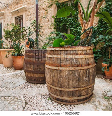 Plants and palms in old wooden barrels in narrow street in the Old Town in Dubrovnik, Croatia, medit