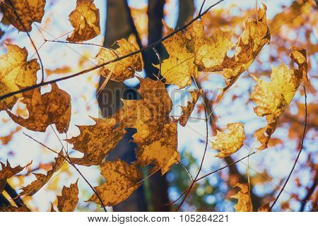 Beautiful autumn background with maple leaves forming a pattern against the sky.