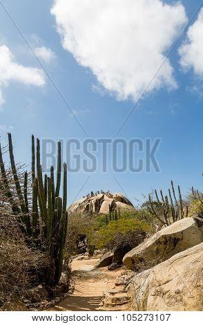 Trail Through Desert