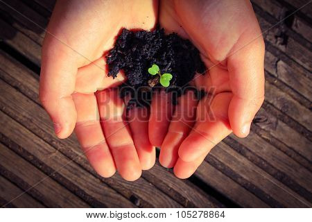 Young hands holding a young sapling in compost