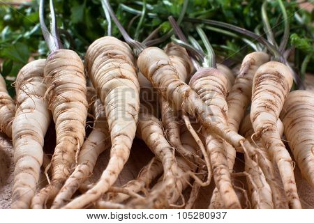 Fresh Parsley Roots