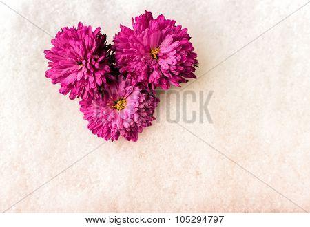 Pink Chrysanthemum Flowers On Snow