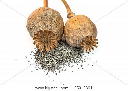 Two Poppy Heads And Seeds Isolated