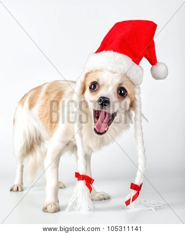 happy Chihuahua dog with Santa hat for Christmas card design