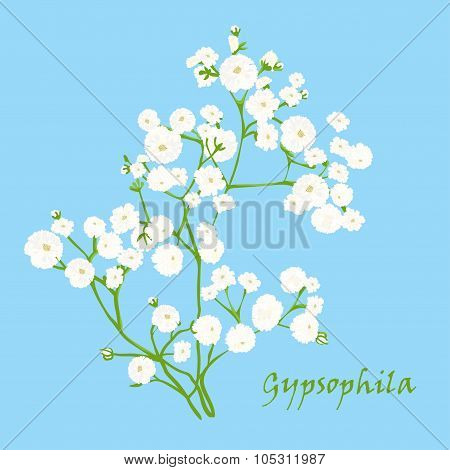 Branch Of Beautiful Hand-drawn Gypsophila