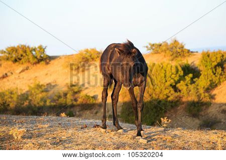 Young Brown Horse - Brown Foal