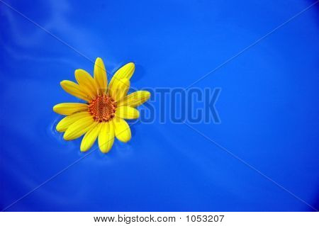 Floating Yellow Flower
