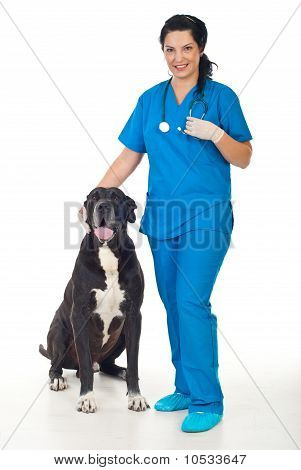 Veterinary With Great Dane Dog