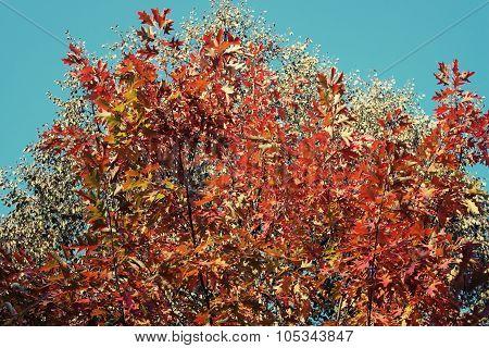 Autumn, fall trees. Sun shining through colorful leaves.