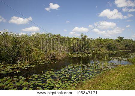 Everglades River