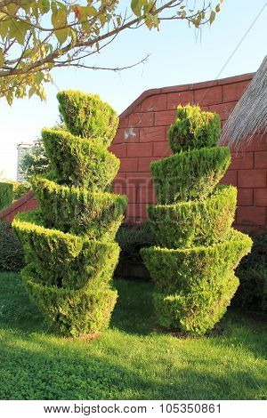 Topiary clipped trees in a public park Ankara Turkey