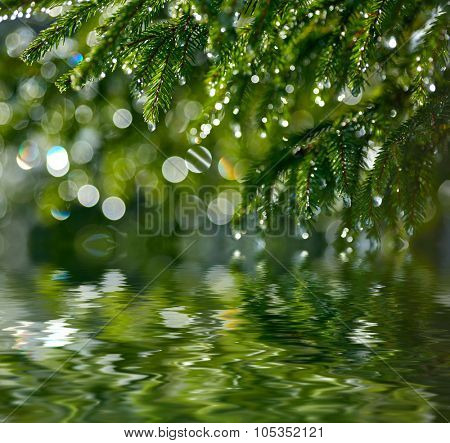 Water drops on fir tree reflected in the water. Shallow DOF