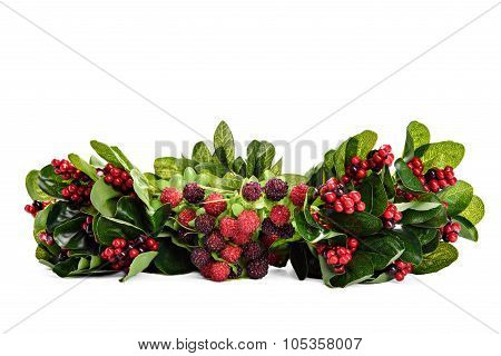 Composition of berries and currants