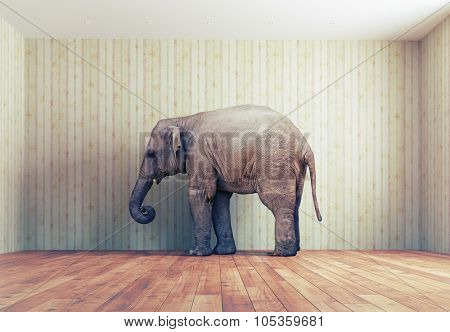 lone elephant in the room. Creative concept