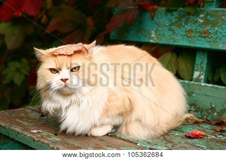 Beige Persian Cat Sit On The Bench