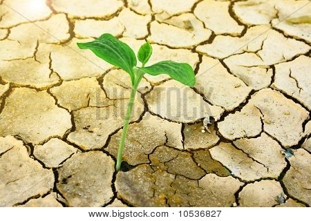 New Growth in Cracked Arid Earth