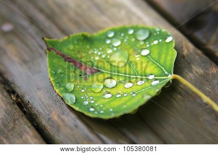Fallen Wet Leaf With Drops
