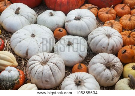 Assortment of colorful pumpkins on a straw background.