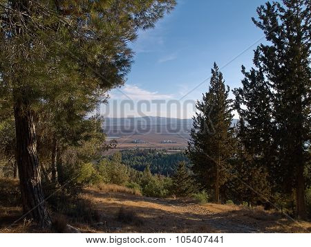 Forest Of Green Mediterranean Pine Trees