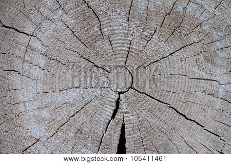 Sawn End Of A Old Grey Log.