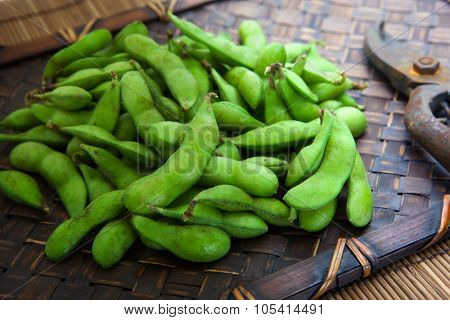 Fresh harvested edamame soybeans, and pruning scissors on wooden tray