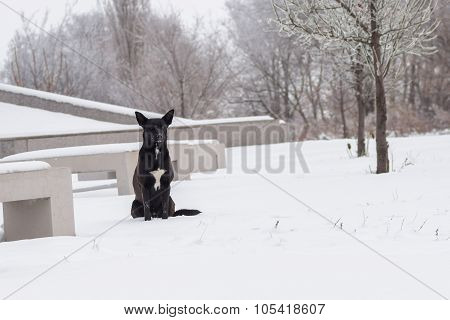 Graceful street dog sitting in the empty park
