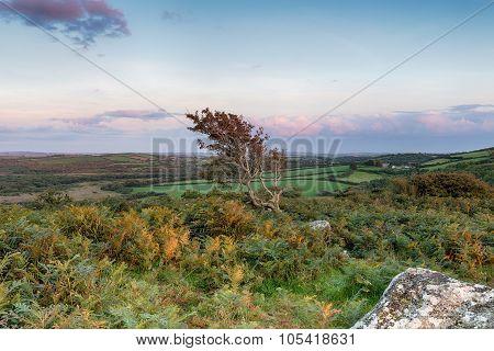 Cornish Moorland