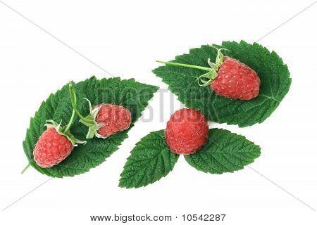 Raspberries With Green Leafs