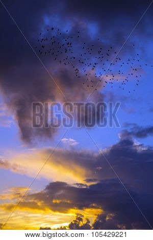 Orange Sunset Sky With Starlings