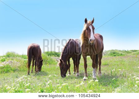 Three horses grazing on meadow