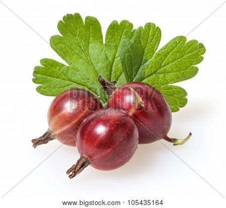 Red Gooseberry Isolated On White Background