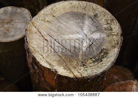 Amrum (germany) - Pile Of Tree Boles
