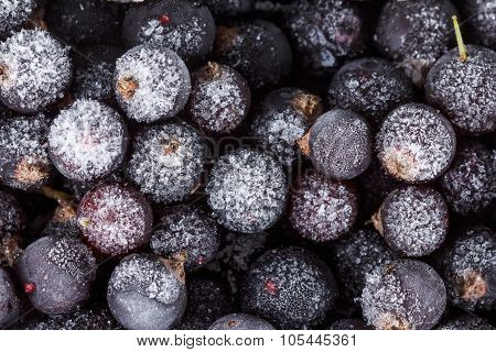 Black Currant Background, Covered With Ice And Snow,  Close Up