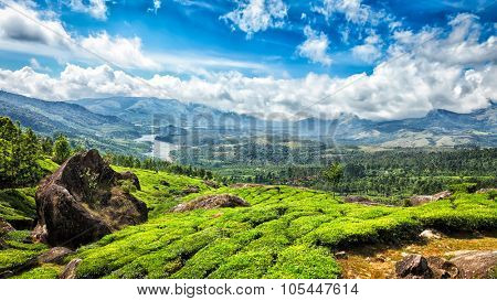 Panorama of green tea plantations in Munnar, Kerala, India