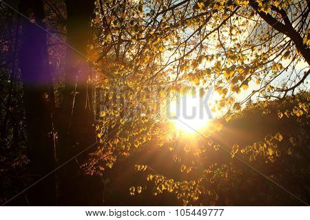 Sunset in the autumn forest. Fall Concept.
