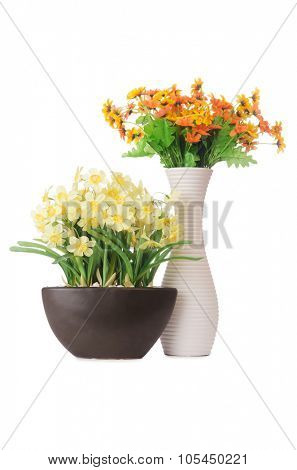 Daisy camomile flowers isolated on white
