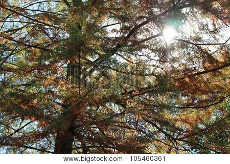 Sunlight filtering through tree with changing leaves