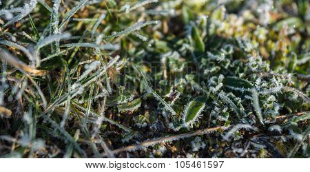 Frost On The Grass In The Early Morning