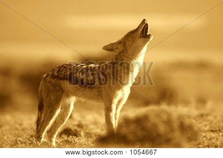 Howling Jackal Sepia