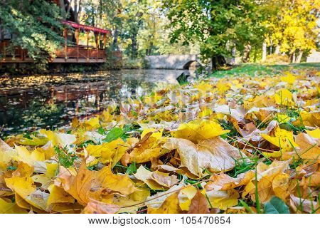 Fall Leaves In Autumn