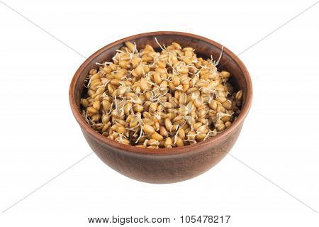 Raw Sprouted Wheat Germ Isolated On White Background