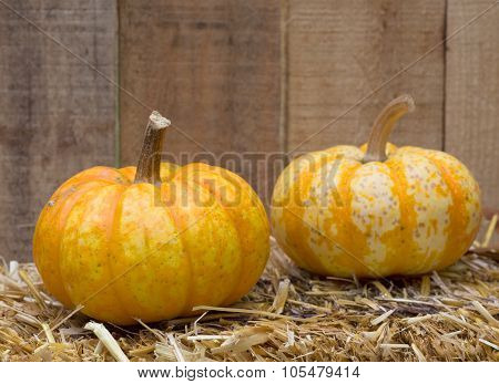 Two Autumn Gourds