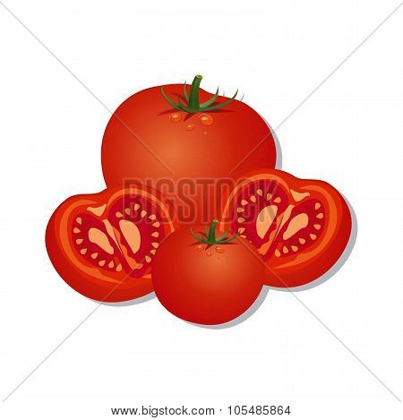 Vector illustrations of fresh tomatoes, isolated on white background
