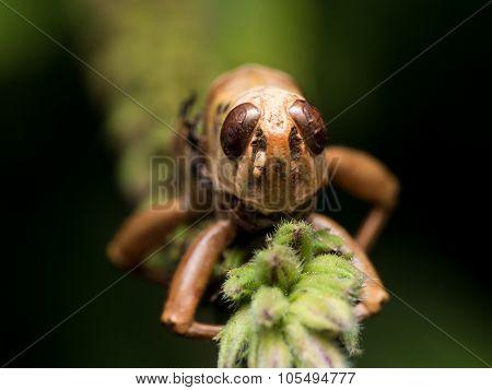 Dead Grasshopper Clinging To Green Grass