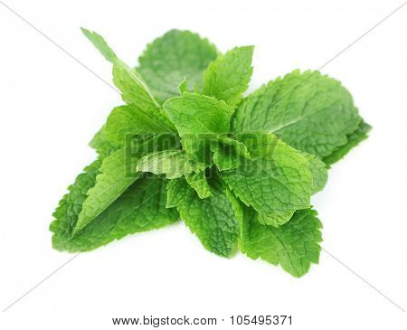Bunch of mint isolated on white, close up