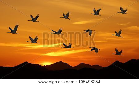 Birds Flying At Sunset Panoramic View