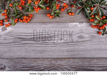 Orange Pyracantha Berries On Old Wooden Texture Board
